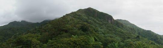 El Yunque森林 库存图片