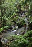 El Yunque,波多黎各 库存图片
