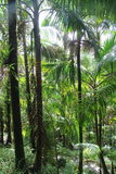 El Yunque Forest Stock Photo