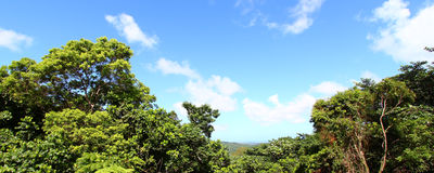 El Yunque National Forest. Panoramic view of the famous El Yunque Rainforest of Puerto Rico Royalty Free Stock Photos