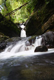 El Yunque National Forest Royalty Free Stock Images