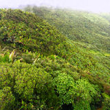 El Yunque National Forest Stock Images