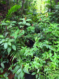 El Yunque National Forest Royalty Free Stock Photography