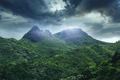 El Yunque National Forest. Is a forest located in northeastern Puerto Rico. It is the only tropical rain forest in the United States National Forest System stock photos