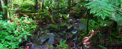 El Yunque National Forest Stock Image