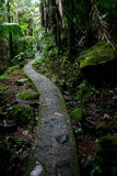 El Yunque National Forest Trail. One of the many trails at El Yunque National Forest.  This is the Palma de Sierra (Mountain Palm) ecological zone.  This is a Stock Images