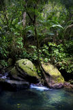 El Yunque rainforest stream pool. A clear cold pool at the bottom of a ravine.  Large rocks on the border.  The vegetation is tropical that is typical of a Royalty Free Stock Images