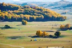 El yurt y los animales de Mongolia en la pradera del otoño Imagenes de archivo
