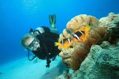 El zambullidor de equipo de submarinismo encuentra Nemo Fotos de archivo libres de regalías
