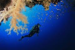 El zambullidor de equipo de submarinismo explora el filón coralino Fotografía de archivo