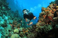 El zambullidor de equipo de submarinismo explora el filón coralino Foto de archivo libre de regalías