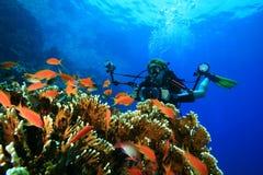El zambullidor de equipo de submarinismo explora el filón coralino con su cámara imagen de archivo libre de regalías