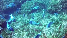 El zambullirse en el mar Mediterráneo metrajes