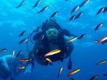 El zambullirse en el mar o Cortez Baja Mexico imagenes de archivo