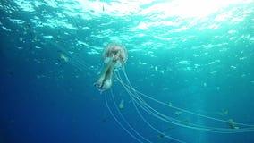 El zambullirse en Mallorca España - medusa metrajes