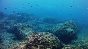 El zambullirse en pescados del mero de Mallorca España bajo el agua - almacen de video