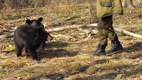 El Zookeeper juega con dos cachorros de oso negro himalayan lindos Safari Park, Rusia metrajes