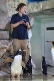 El Zookeeper realiza la alimentación pública de pingüinos foto de archivo