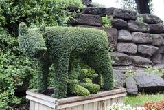 Ela-lobo dado forma Evergreen Imagem de Stock Royalty Free