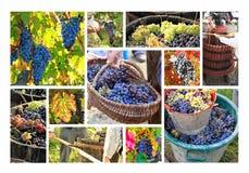 Elaboración de vino imagenes de archivo