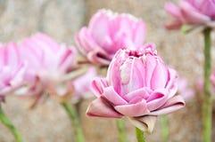 Elaborate pink lotus for worship buddha Royalty Free Stock Images