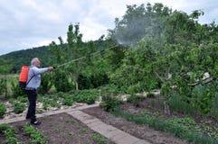 Elaborazione degli alberi nel giardino dai parassiti immagine stock libera da diritti