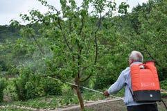 Elaborazione degli alberi nel giardino dai parassiti fotografia stock