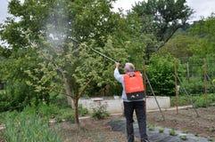 Elaborazione degli alberi nel giardino dai parassiti fotografie stock