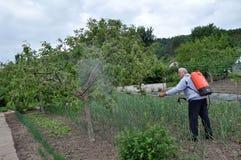 Elaborazione degli alberi nel giardino dai parassiti fotografie stock libere da diritti