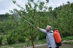 Elaborazione degli alberi nel giardino dai parassiti fotografia stock libera da diritti