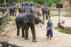 Elaphant играя обруч hula, Чиангмай, Таиланд Стоковое Изображение RF