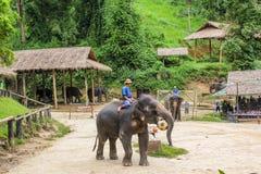 Elaphant играя шарик, Чиангмай, Таиланд Стоковое Изображение