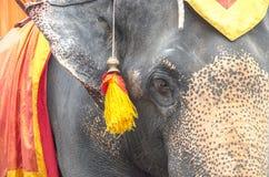 A Elaphant. Stock Image