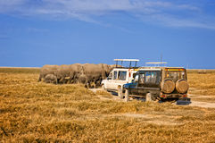 Elaphants of Amboseli Royalty Free Stock Images