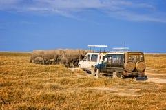 Elaphants Of Amboseli Royalty Free Stock Images