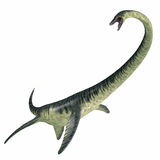 Elasmosaurus op Wit royalty-vrije illustratie