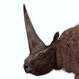 Elasmotherium Head Stock Photo