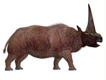 Elasmotherium Side Profile Stock Photography