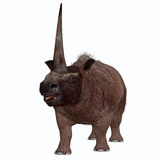 Elasmotherium on White Royalty Free Stock Images