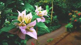Elasticità del ll i un fiore Immagini Stock