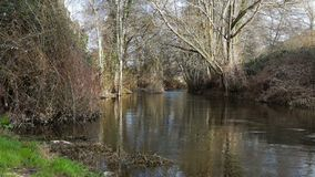 Elasticitet av en flod och träd stock video
