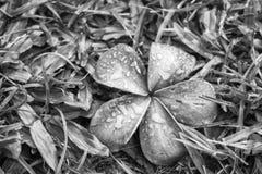 Elastisk blomma i gräs med regndroppar efter orkanstorm B royaltyfri fotografi