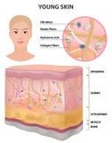 Elastisk för hudkvinnor ung sund detaljerad teckning, cosmetologyvektor stock illustrationer