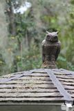 Żelazna rzeźba sowa na górze Gazebo Zdjęcie Stock