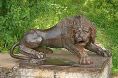 Żelazny lew przy wielkimi kamiennymi schodkami w Pavlovsk pałac parku Rosja Zdjęcia Stock