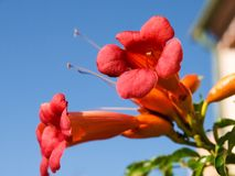 Elba ö, blommor Royaltyfri Fotografi