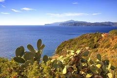 Elba island, cactus indian fig opuntia, coast view Capoliveri Tu Stock Photography
