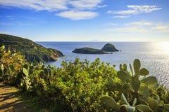 Elba island, cactus indian fig opuntia, Innamorata Beach view Ca Royalty Free Stock Photography