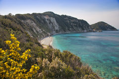 Elba Island. Desert beach, flowers and cristal clear water Stock Photo