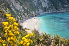 Elba Island. Desert beach, flowers and cristal clear water Royalty Free Stock Photos